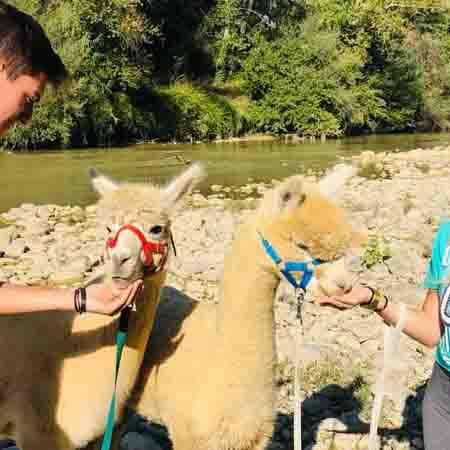 alpaca trekking corto