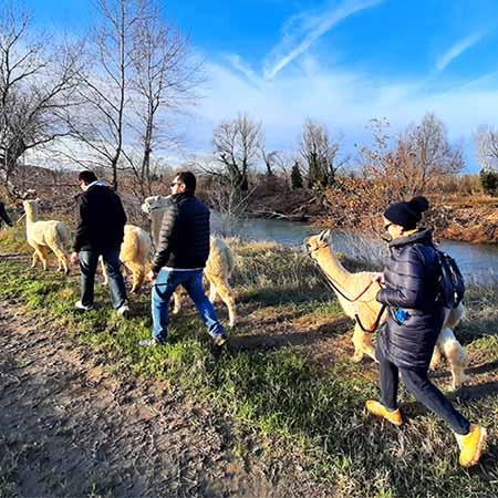 passeggiata con alpaca corta