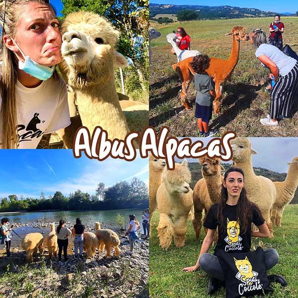 Alpaca Trekking Albus ALpacas